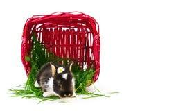 复活节兔子,篮子,草 免版税库存照片