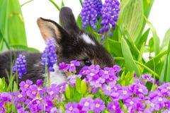 复活节兔子,花 免版税库存照片