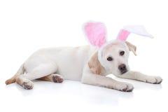 复活节兔子 库存照片