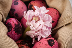 复活节变粉红色与花的鹌鹑蛋在袋子 免版税库存照片