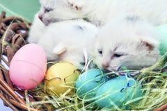 复活节小猫特写镜头 免版税库存图片