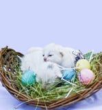 复活节小猫 免版税库存照片