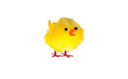 复活节小鸡 免版税库存图片