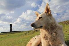 复活节岛白色狗 免版税库存图片