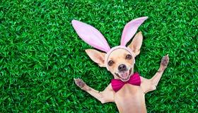复活节彩蛋兔宝宝狗 免版税库存照片
