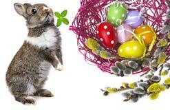 复活节彩蛋和兔子 库存图片