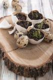 复活节彩蛋壳装饰 库存图片