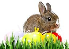 复活节彩蛋小的兔子 免版税库存照片