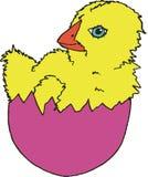 复活节彩蛋小鸡 库存图片
