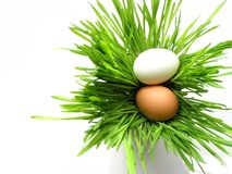 复活节彩蛋放牧白色 库存图片