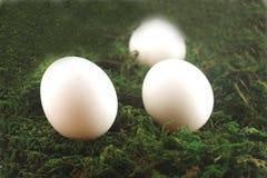 复活节彩蛋草 免版税库存图片