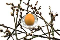 复活节杨柳和鸡蛋在白色背景 免版税图库摄影