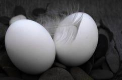 复活节构成用鸡蛋和羽毛 图库摄影