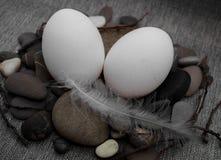 复活节构成用鸡蛋和羽毛 库存图片