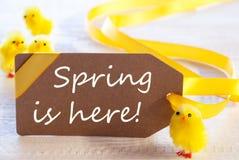 复活节标签,小鸡,文本春天在这里 库存照片