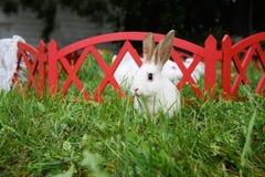 复活节白色兔宝宝草 库存照片