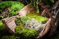 复活节的五颜六色的鸡蛋在日出的森林里 免版税图库摄影