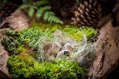 复活节的各种各样的鸡蛋在日出的森林里 免版税库存照片