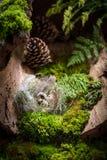 复活节的新鲜的鸡蛋在日出的森林里 免版税库存图片