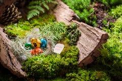 复活节的鹌鹑蛋在日出的森林里 图库摄影