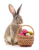 复活节篮子和兔宝宝 免版税库存照片