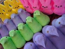 复活节蛋白软糖窥视 免版税图库摄影