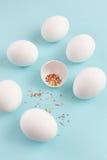 复活节装饰白色鸡鸡蛋和残破的鸡蛋与上色 免版税图库摄影