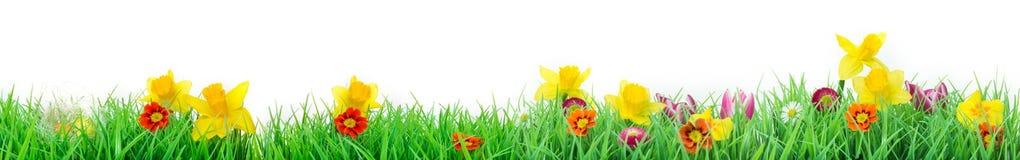 复活节,花草甸,被隔绝,横幅 免版税库存图片