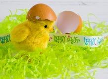 复活节-与蛋壳的愉快的复活节黄色小鸡在白色木背景 免版税库存图片