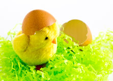 复活节-与蛋壳的愉快的复活节黄色小鸡在白色背景 库存照片