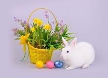 白色与花的兔宝宝、篮子和色的鸡蛋 库存图片