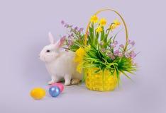 白色兔宝宝,与花和复活节彩蛋的篮子 免版税库存照片