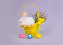 在一个篮子的蓬松白色兔宝宝与花和复活节彩蛋 库存图片