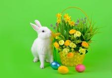 花白色兔宝宝和篮子在绿色的 免版税库存照片