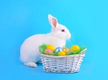 鸡蛋白色兔宝宝和篮子在蓝色的 免版税图库摄影