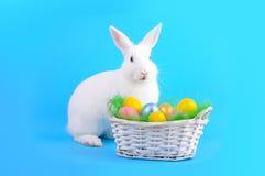 鸡蛋逗人喜爱的兔宝宝和篮子在蓝色的 免版税库存图片