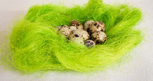 复活节绿色篮子巢用鹌鹑蛋 免版税图库摄影