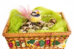 复活节绿色篮子巢用鹌鹑蛋 库存照片