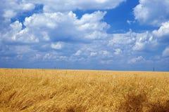 夏令时麦子 库存图片