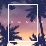 夏夜棕榈 免版税库存照片