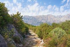 夏天与古老鹅卵石路的山风景 黑山, Vrmac山,科托尔湾 免版税库存图片