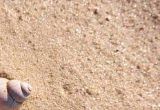 夏天与壳、沙子和空间的背景模板文本的 库存照片