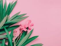 夏天与夹竹桃叶子和花绽放的背景概念  库存图片