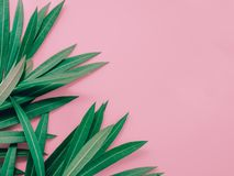 夏天与夹竹桃热带花叶子的背景概念  免版税图库摄影