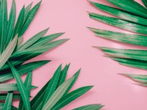 夏天与夹竹桃热带f绿色叶子的背景概念  库存照片