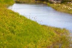 夏天与小河小河的冰岛风景 库存图片