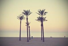 夏天与棕榈的海滩风景,日落,减速火箭/葡萄酒 免版税库存图片