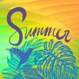夏天与热带植物群和蜂鸟的传染媒介背景 库存照片