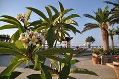 夏天与花的海视图在希腊,克利特 免版税库存照片