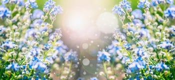 夏天与蓝色花的自然背景和太阳发光与bokeh照明设备 免版税库存图片